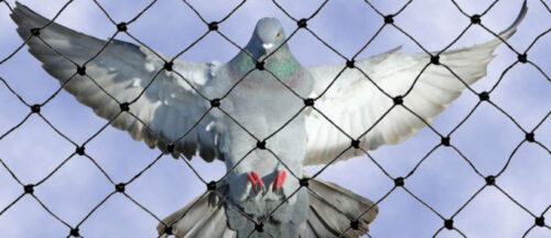 reti-anti-piccioni
