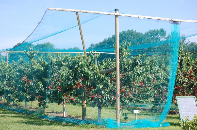 rete-protezione-frutteti